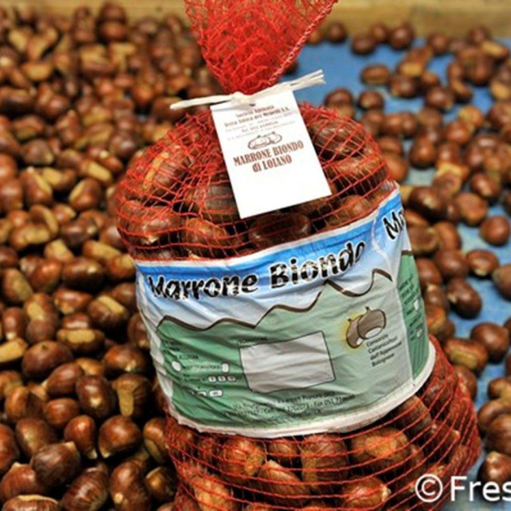 Mechanized harvesting for chestnuts