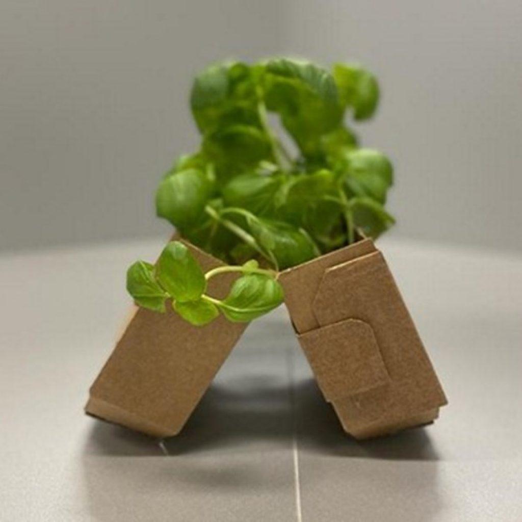 Aromatic herbs in cardboard boxes