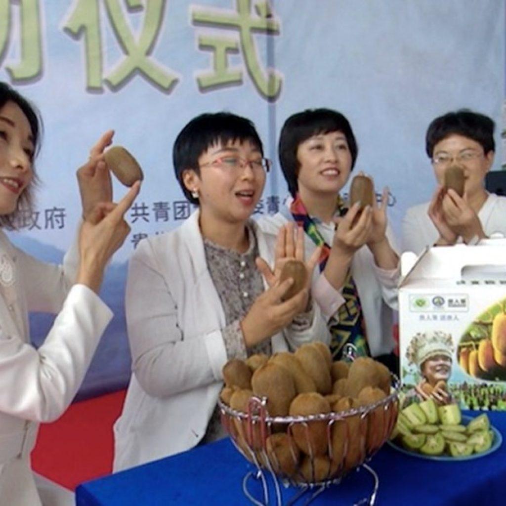 Xiuwen county sold record volume of Chinese kiwi fruit this season