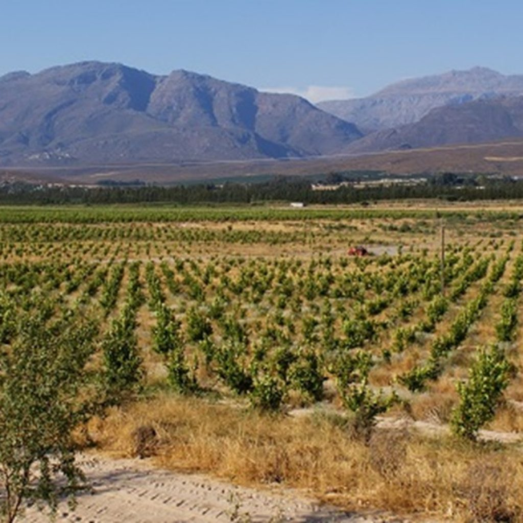 South African citrus exports to US increase by 63.4%