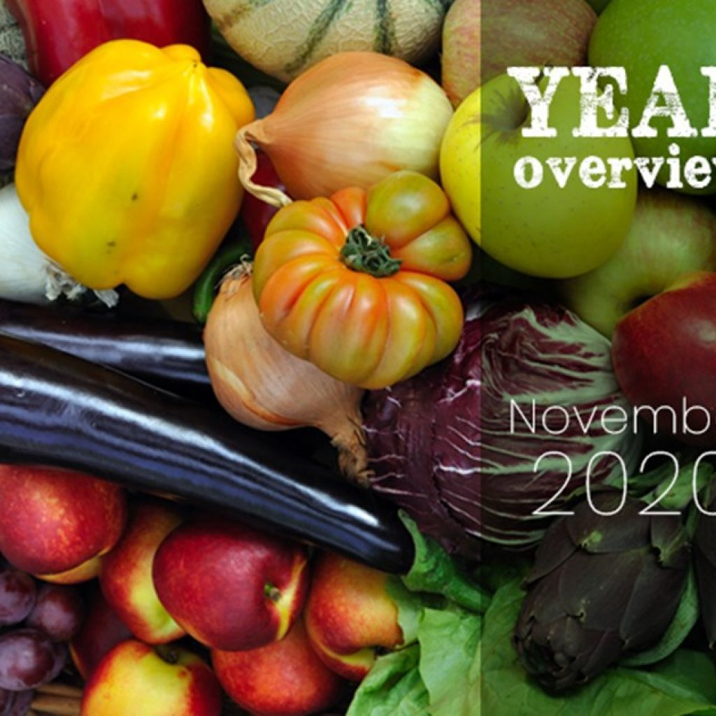 Year overview 2020: November