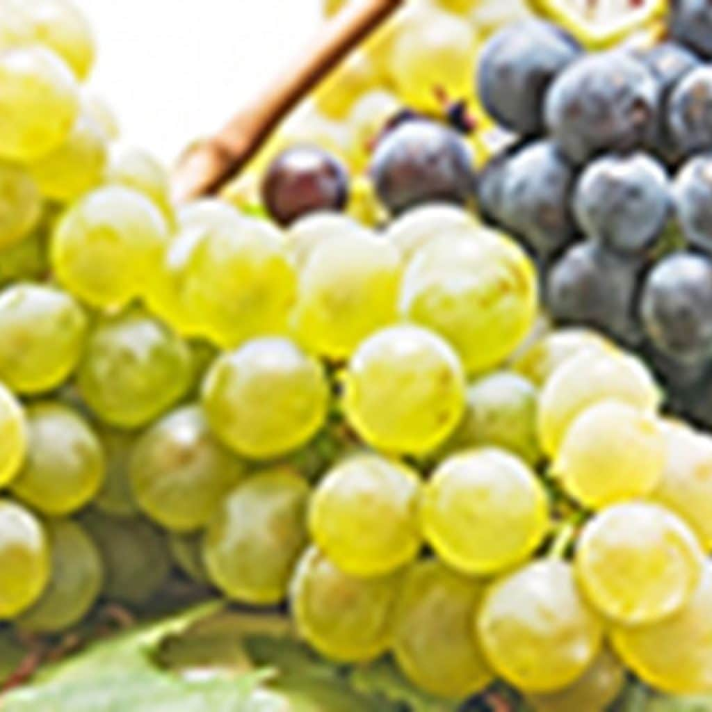 Export market for Indian grapes set to shrink in 2021