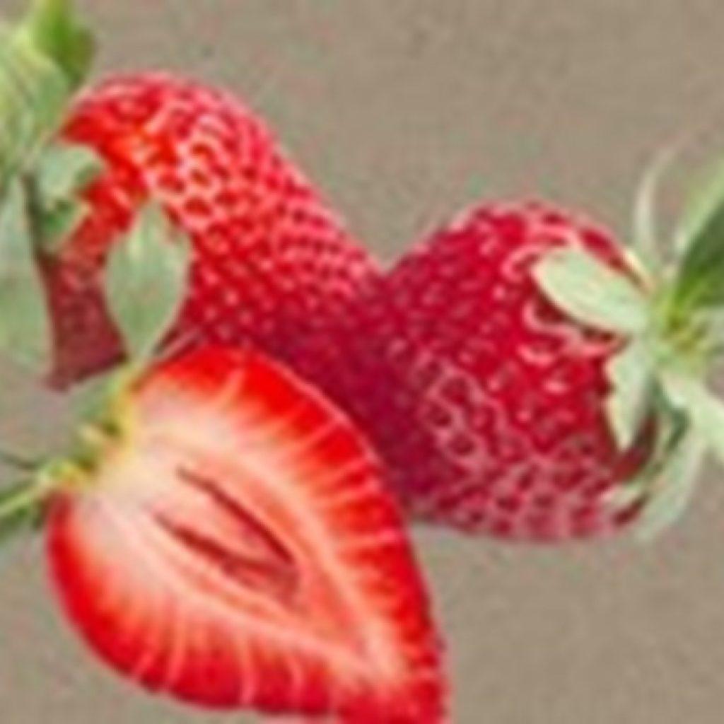 """Calinda is no ordinary organic strawberry"""