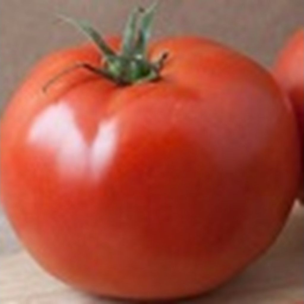 Hot-water treatment works against chilling injury symptoms in fresh tomatoes