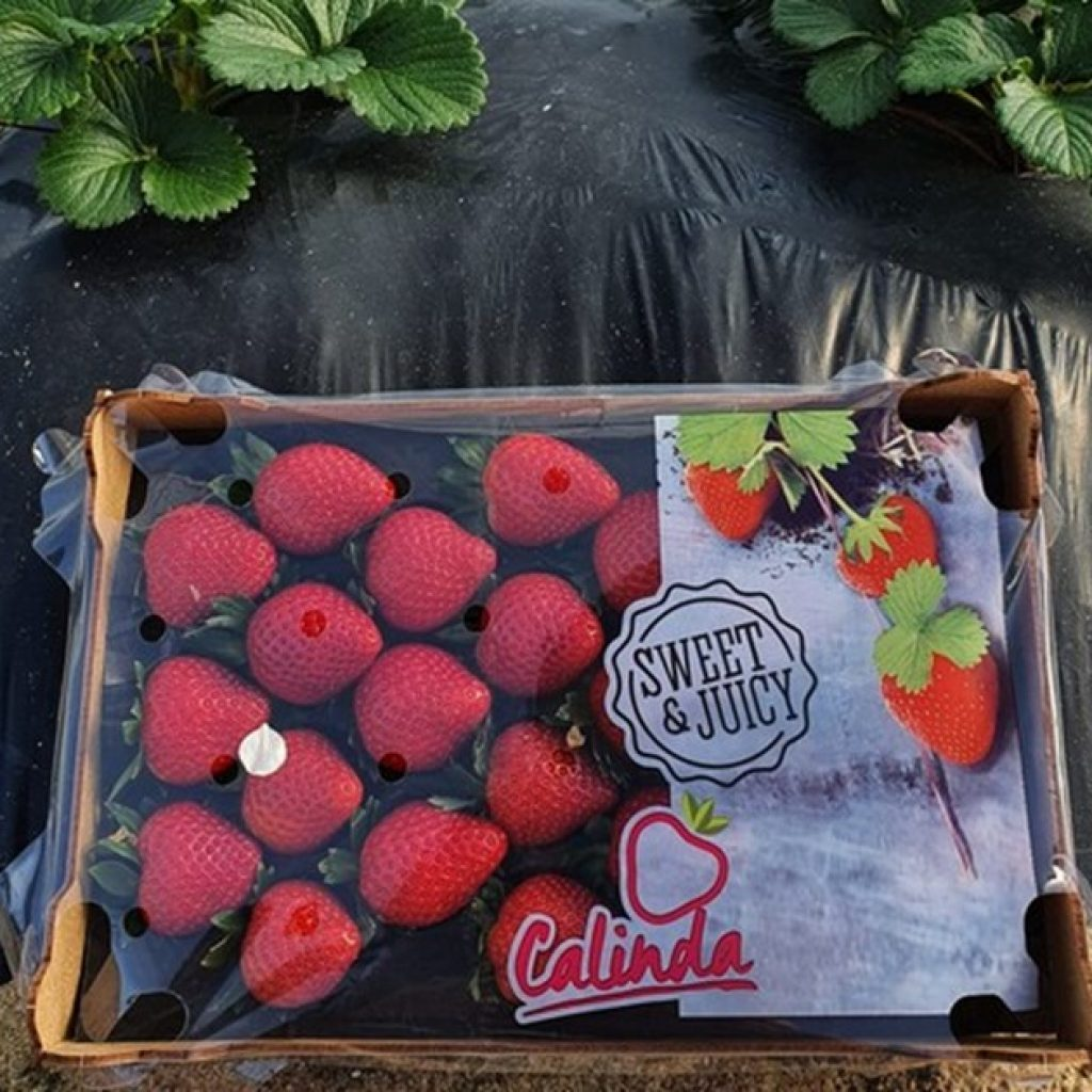 """""""Cold weather in Huelva has caused some delays in strawberry production"""""""