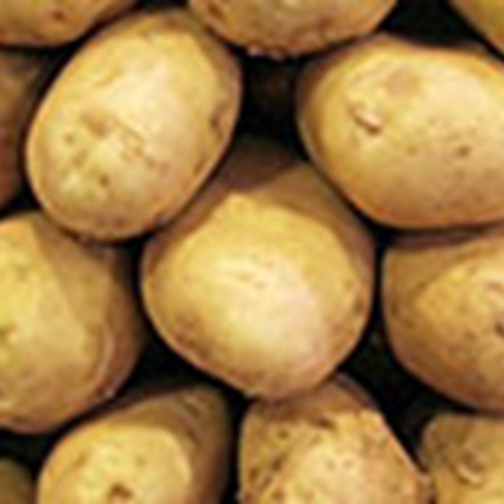 Brexit might be opportunity to market Irish seed potatoes