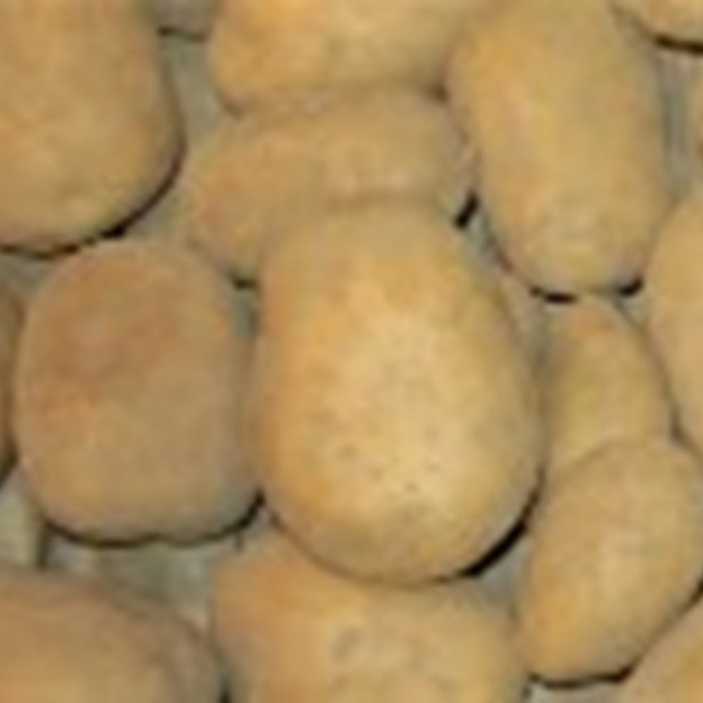 Kenyan government commissions cold storage facilities to eliminate potato losses