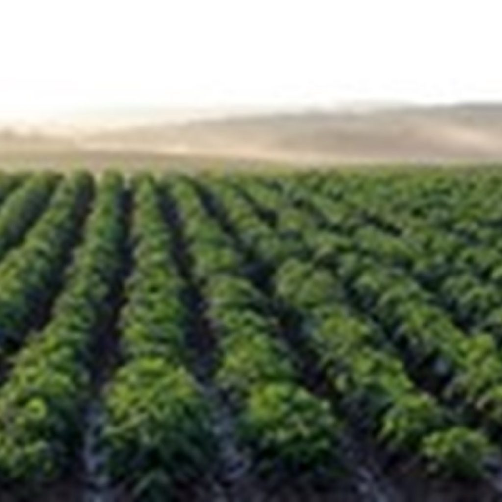 Recommendation to sow 15% fewer potatoes in Castile-Leon in 2021