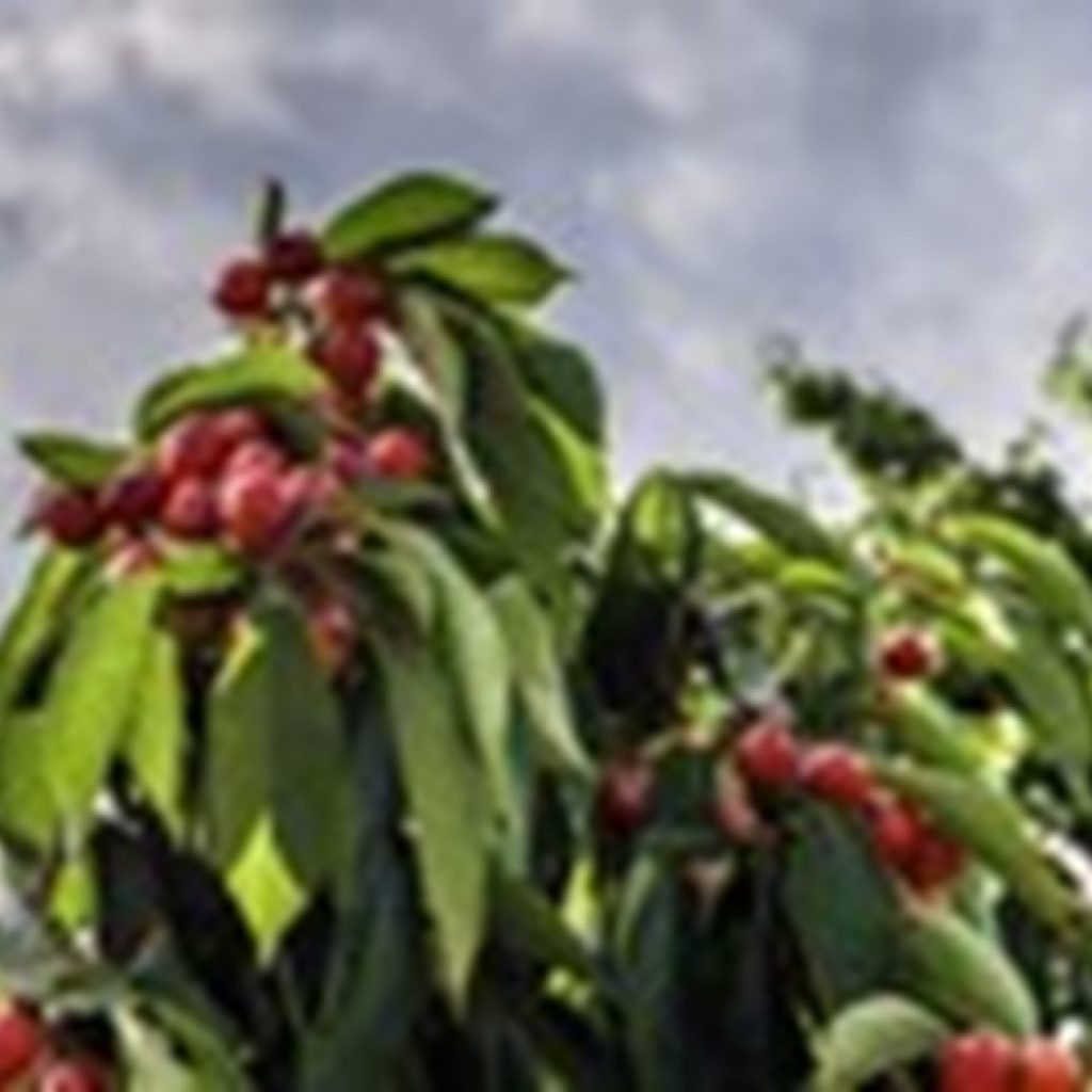 """""""Spain could achieve the goal of 25% organic production by 2030"""""""