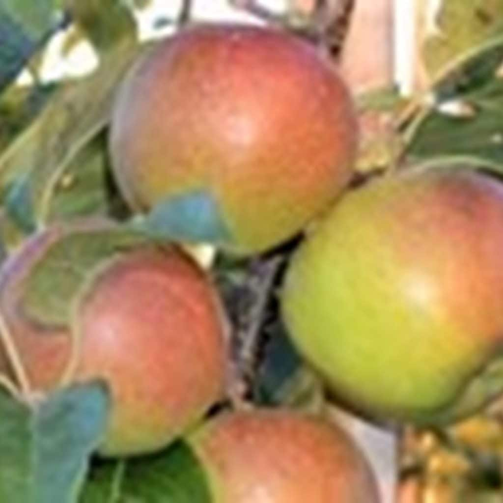 Tough times not yet over for Canadian fruit growers
