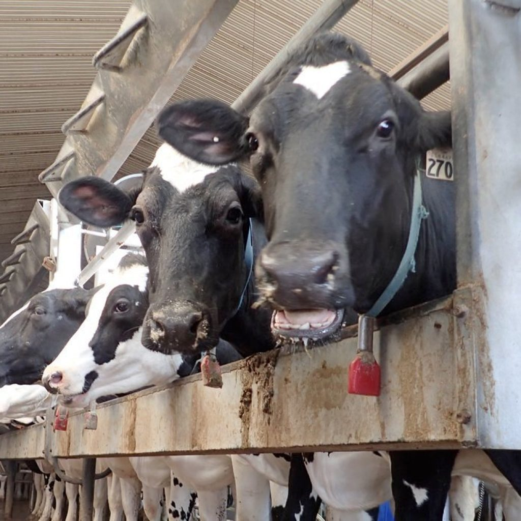 Dairy compensation payments arrive   The Western Producer