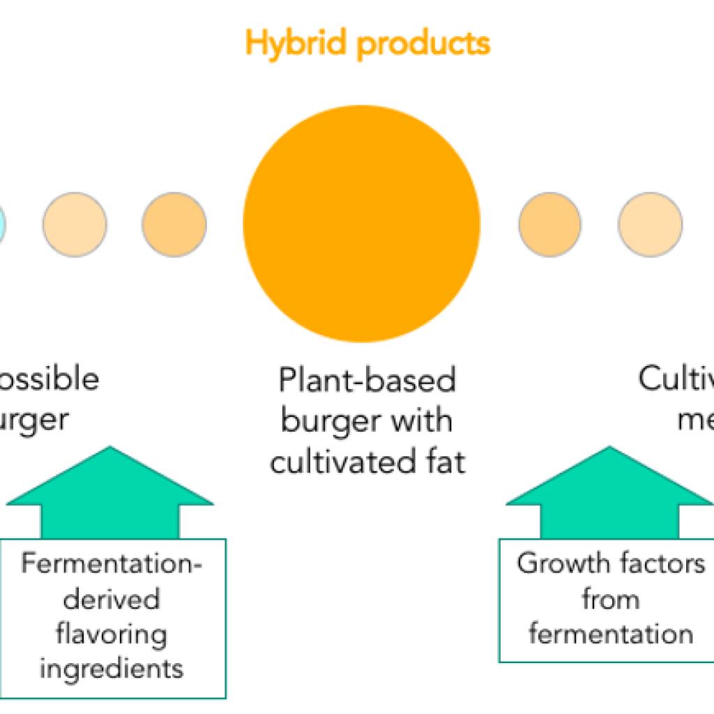 Fermentation: the next frontier of alternative proteins