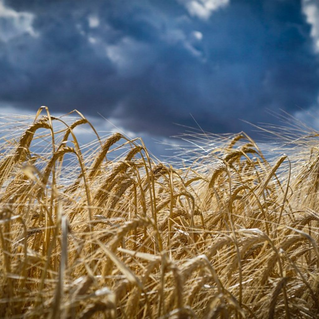 Sask. crop insurance coverage increases