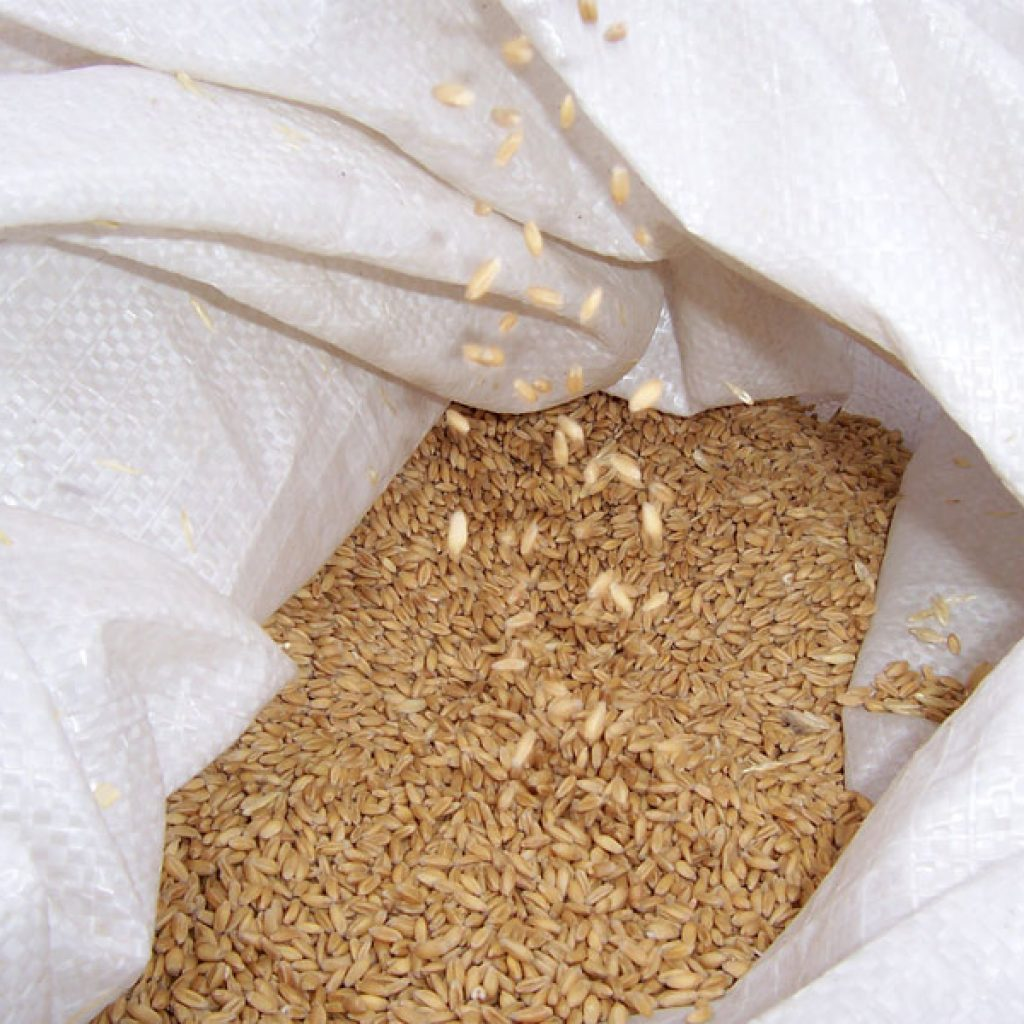 Global malnutrition: why cereal grains could provide an answer