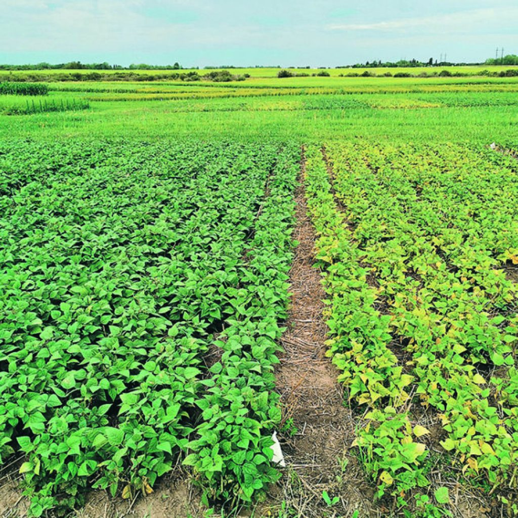 Black beans become more viable option