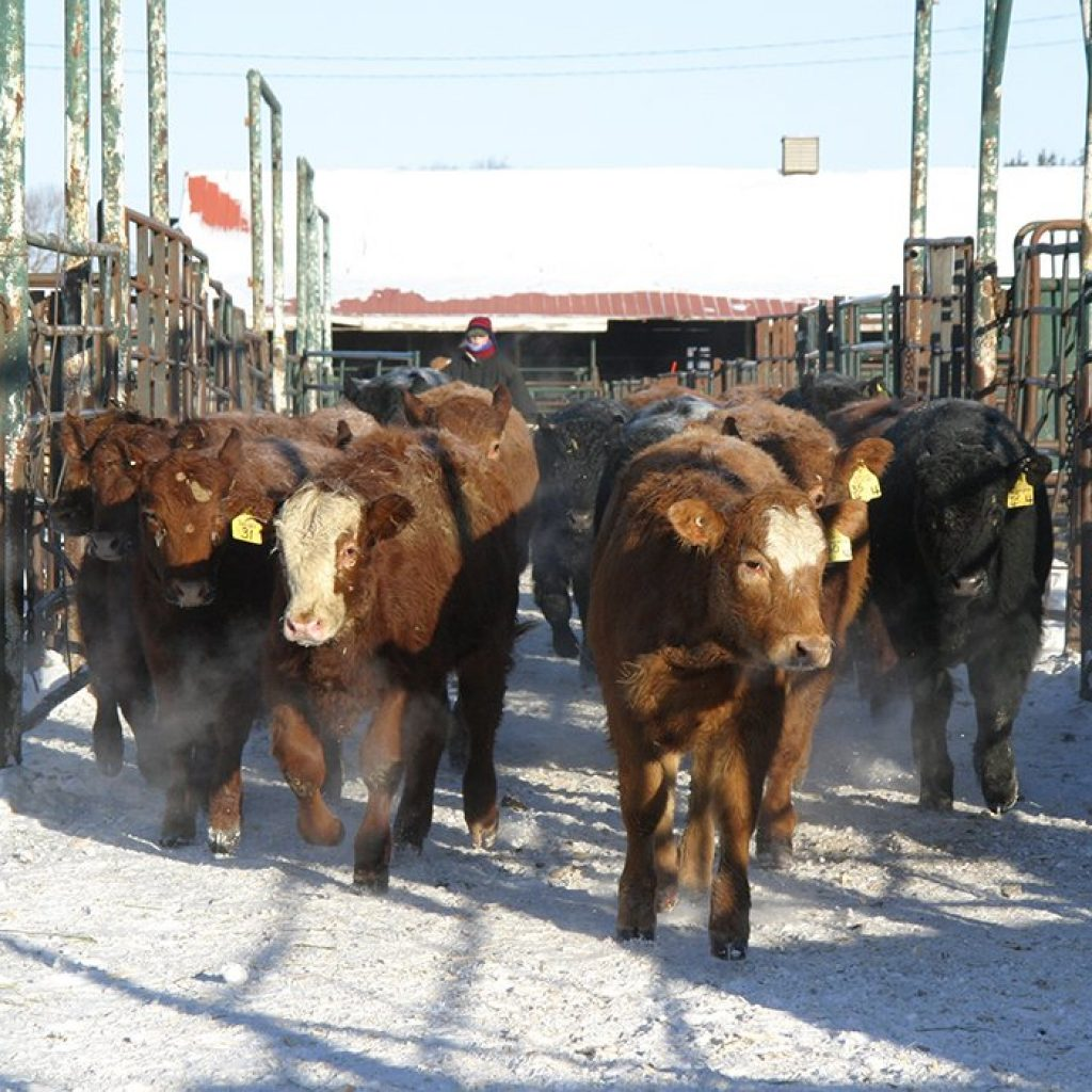 Canada moves closer to improved BSE status