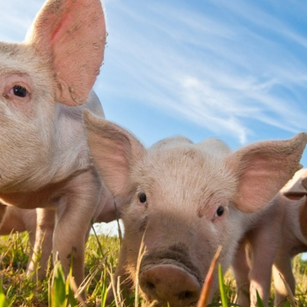 Hormel, Tyson and Smithfield among those accused in pork price-fixing scheme