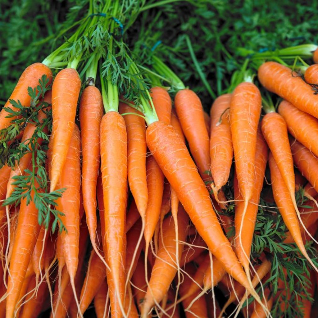 Project aims to study organic value chains