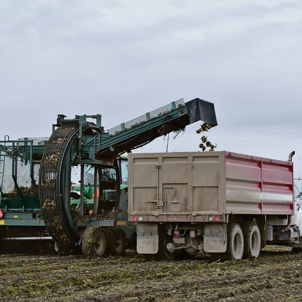 Top beet growers named in southern Alberta