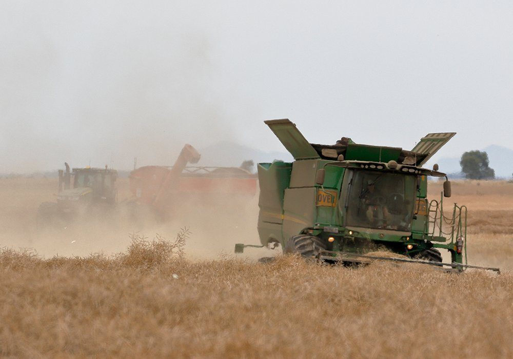 The USDA's Foreign Agricultural Service (FAS) is forecasting 3.9 million tonnes of production, slightly below last year's bumper crop of four million tonnes.