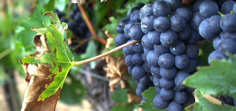Chr. Hansen Natural Colors acquires Secna Natural Ingredients