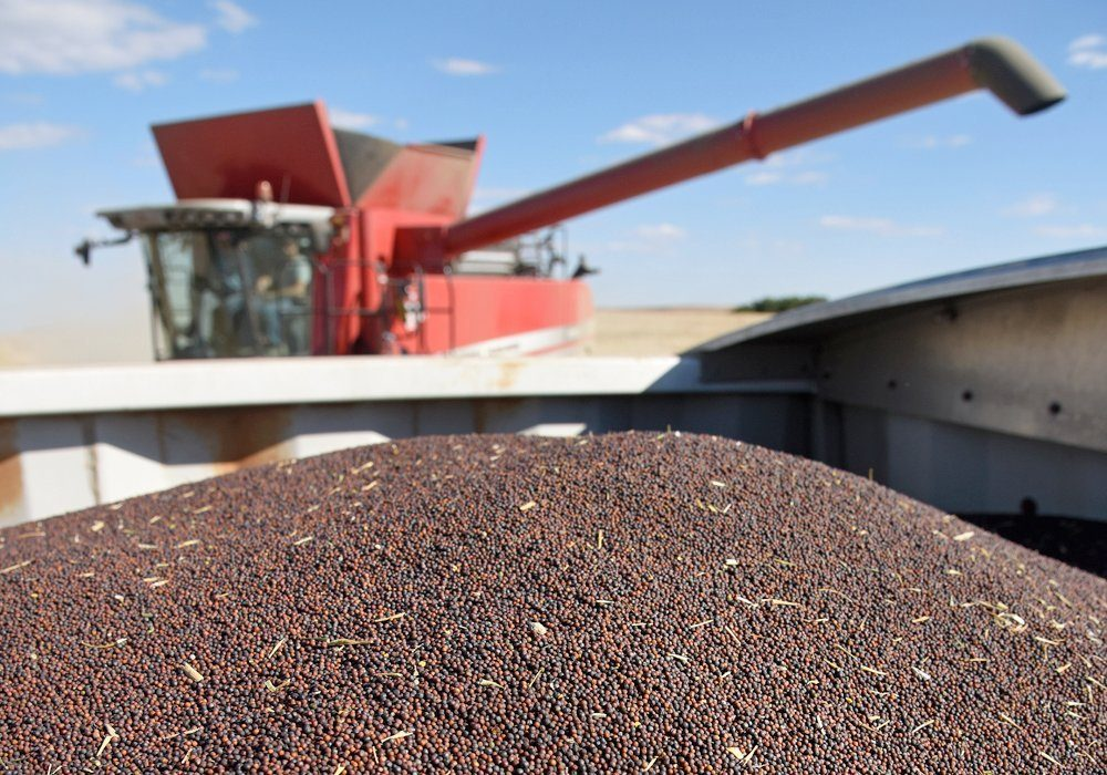Canola is best poised to take advantage of this opportunity because it contains far more oil than competing crops and is already the preferred feedstock for the EU biofuel industry.