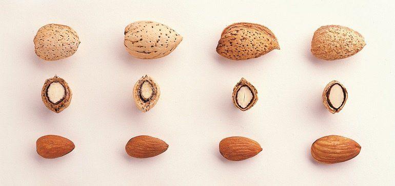 Getting to know California almond varieties