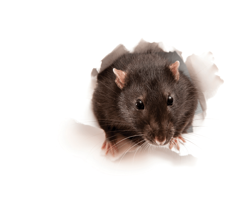 HOT SPOTS FOR PESTS - Checking these will help keep your food processing facility pest-free —BY ALICE SINIA —