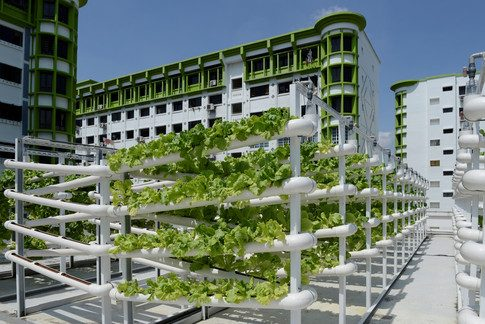 How Singapore's urban farms are improving food security