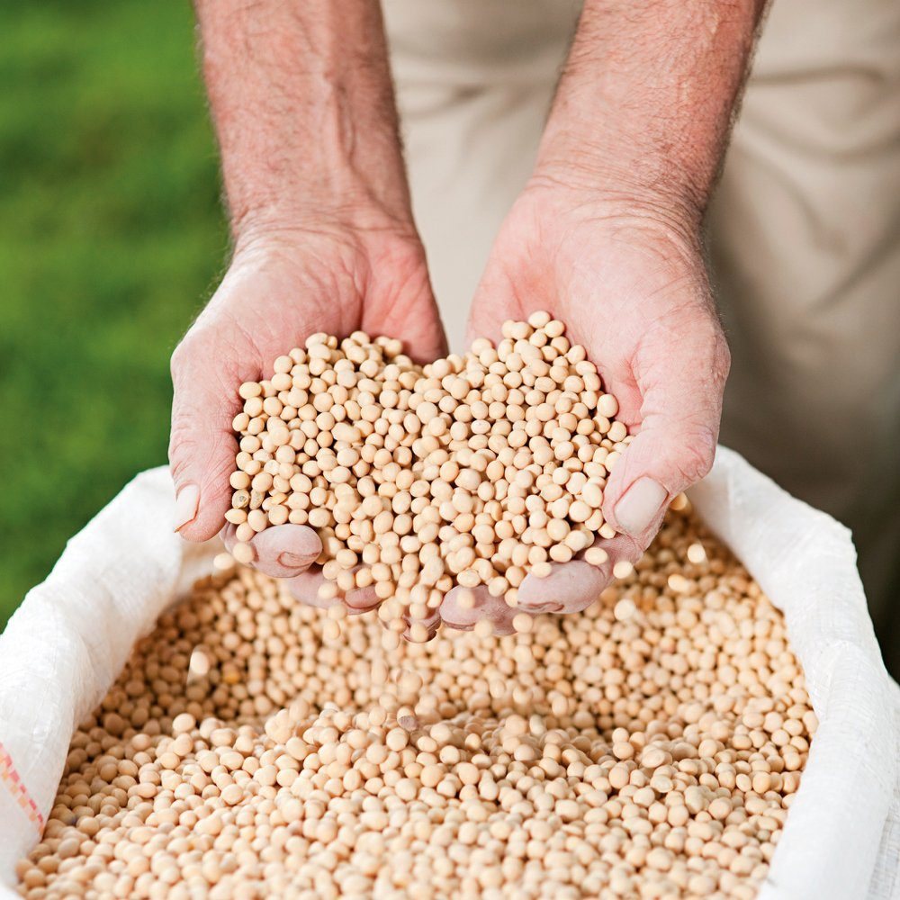 Soybeans have been the focus of many new products developed by students in the 25 years of Project SOY.