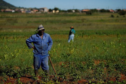 Insurance company Pula is a lifeline for many African farmers