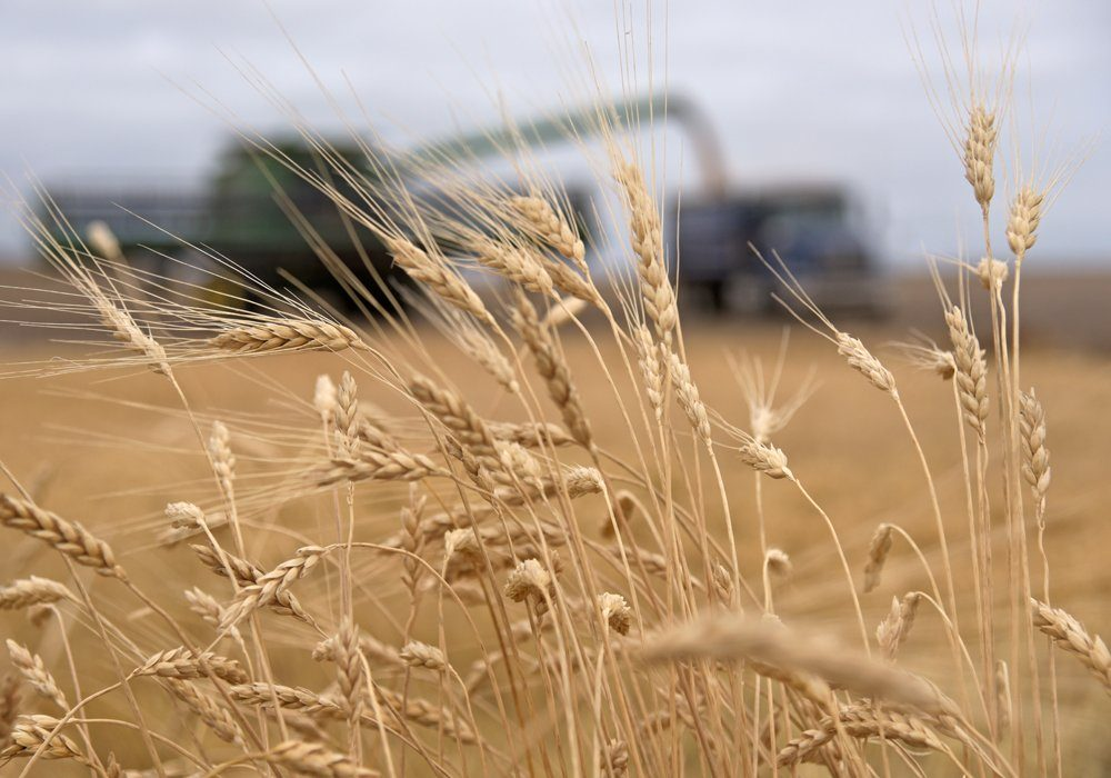 Morocco has been Canada's second largest durum customer through the first seven months of 2020-21, purchasing 740,800 tonnes of the crop, according to the Canadian Grain Commission.