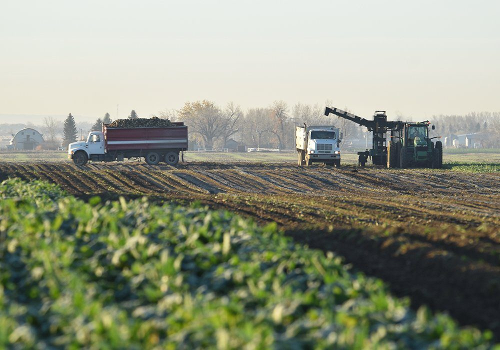 ASBG president Gary Tokariuk said April 1 that the two-year agreement will see 28,000 acres of sugar beets planted in southern Alberta this year and next.