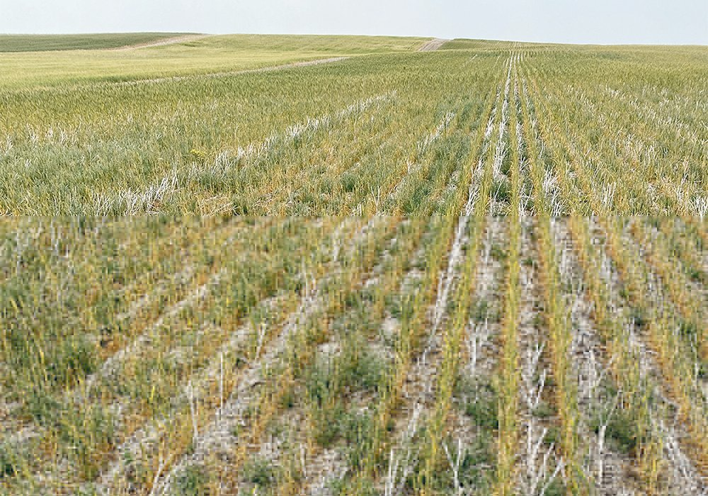 Task force chair Bill Prybylski, who farms near Willowbrook, Sask., said the funding hasn't even kept up with the rate of inflation. Programs within the agreement have been cut and need restoration, and the risk associated with farming is considerably more than it was 10 years ago.