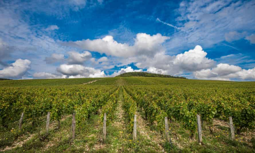 The Grand Cru vineyards of Chablis in Burgundy, France, in a good year.